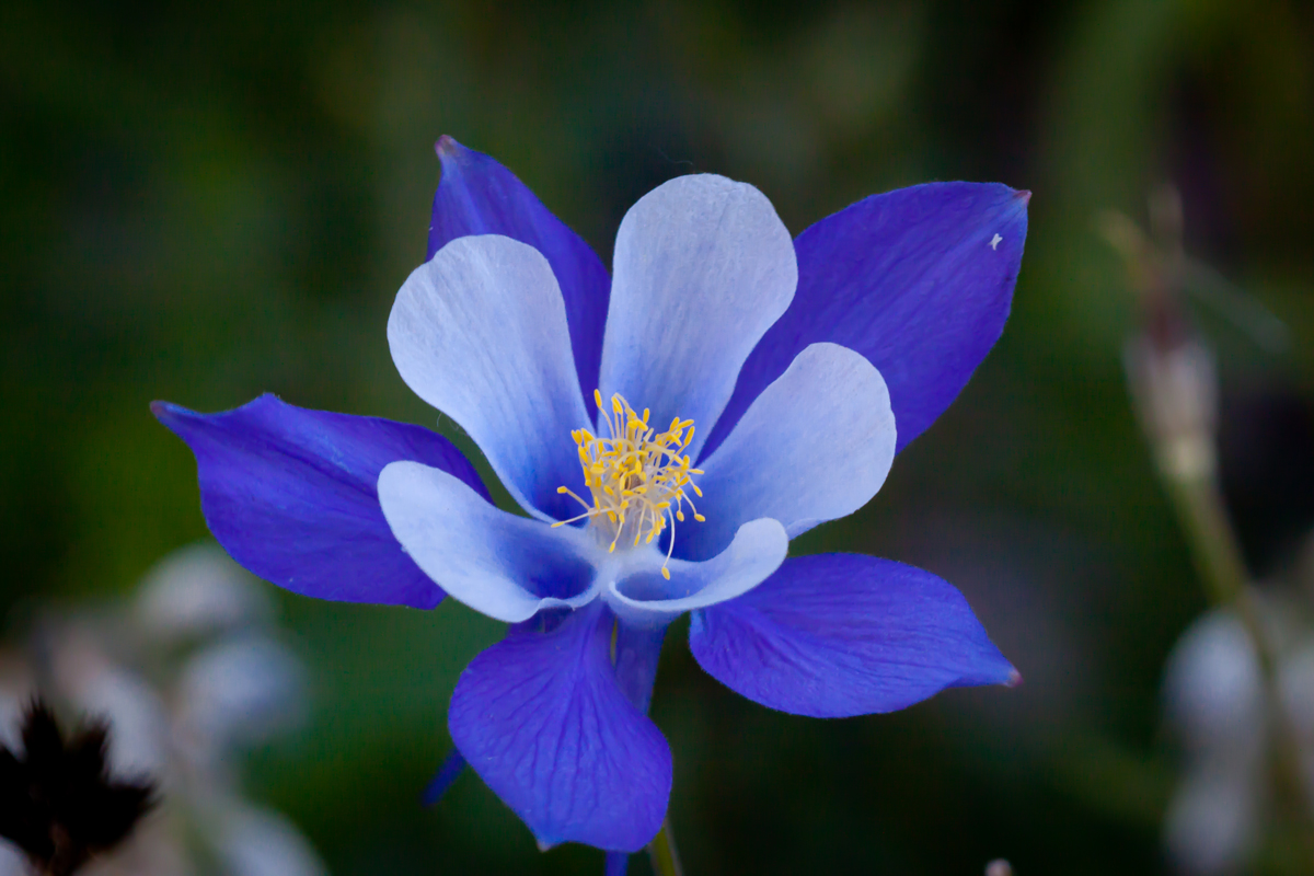 Most beautiful blue flowers in the world 50 most beautiful flowers in the world stylecraze dhlflorist Images