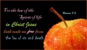 Romans 8 2